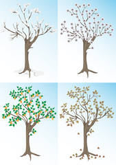 Apricot tree and the seasons.Background.