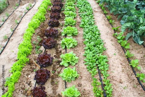 riego por goteo en hortalizas