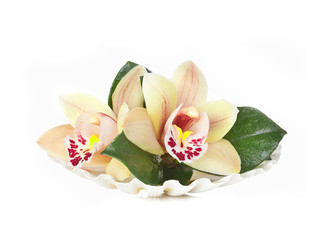 Orchidee Marine