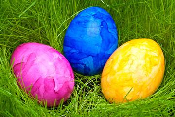 farbige Ostereier versteckt im Gras
