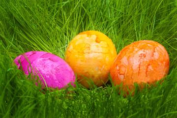 farbige Ostereier mit Tautropfen im Gras