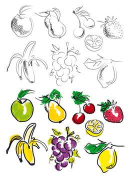 FRUITS ILLUSTRATION 1