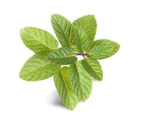 Close up of mint