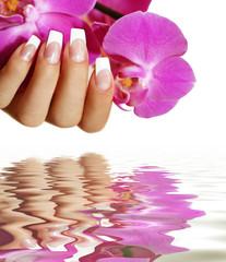 Wall Mural - Orchidee mit Wasser