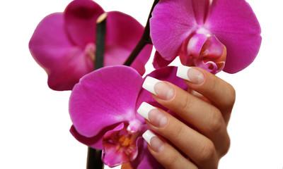 Wall Mural - Frauenhand mit einer Orchidee
