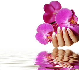 Wall Mural - Orchidee Wasserspiegelung