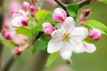 Obraz Frühling 12.1 - fototapety do salonu