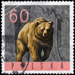 POLAND - CIRCA 1965 Bear