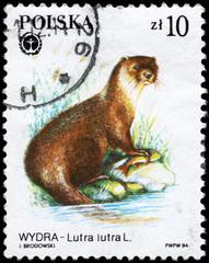 POLAND - CIRCA 1984 Otter