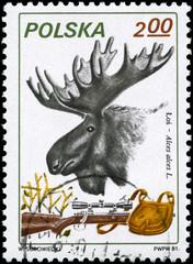 POLAND - CIRCA 1981 Moose