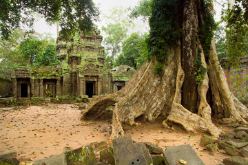 Ta Prohm Temple in Cambodia