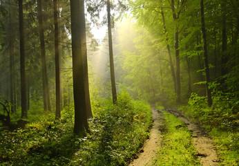 Foto auf Acrylglas Straße im Wald forêt