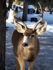 Cemetery Buck