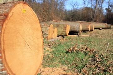 abgeholzter Wald Abholzung