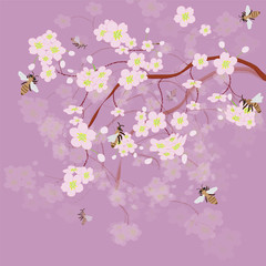 Blossoming of cherry and bees