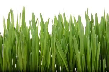 Breen grass backdground