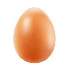 Realistic brown egg isolated on white background