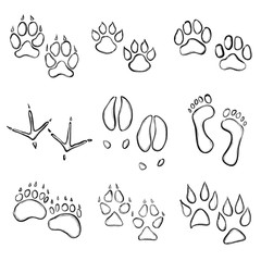 collection of animal paw prints