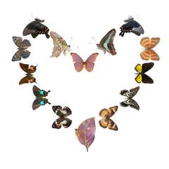 butterfly heart sharp frame