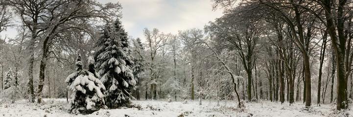 Neige sur la Forêt et les arbres en hiver Wall mural