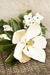 Magnolia and Dogwood