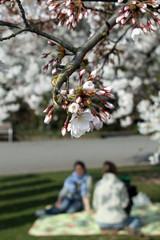 Picknick im Frühling II