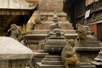 macaque and Granite stupas at Swayambunath.