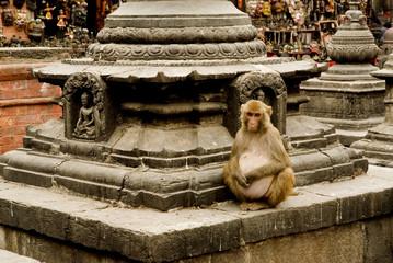 Macaque at stupa in swayambunath.