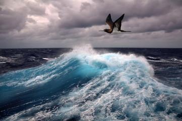 sea wave and seagull