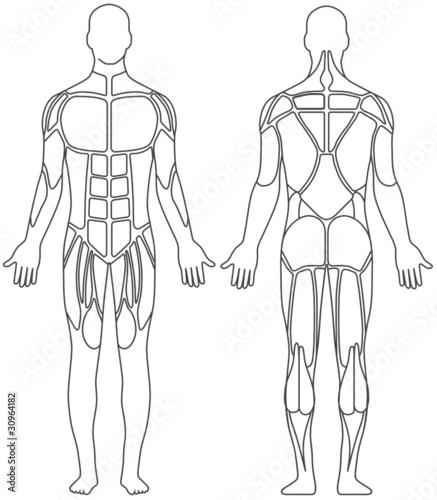u0026quot human body u0026quot  stockfotos und lizenzfreie vektoren auf