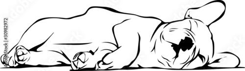 """french bulldog baby sleeping"" stockfotos und lizenzfreie"