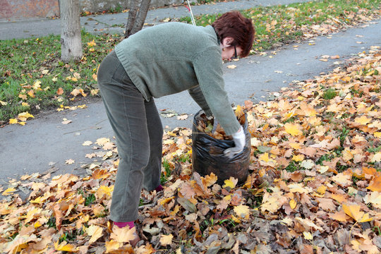 Sixty  year old woman  picking leaves