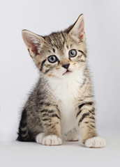 Little tabby kitten looking somewhat sad