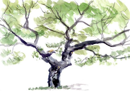 tree, watercolor