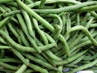 Papier Peint - fresh green bean species