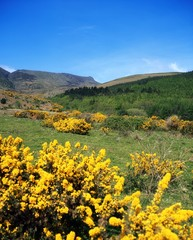 Co Waterford, Comeragh Mountains, Near Crottys Rock, Ireland