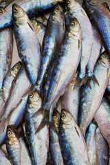 Fresh shad fish in seafood market