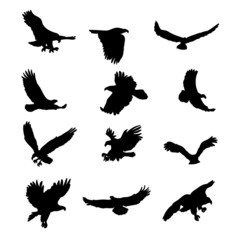 Eagles silhouettes