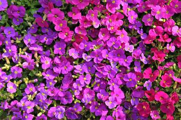 fiori 1218