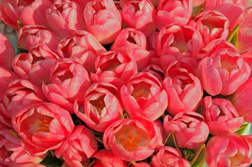 fiori 1222