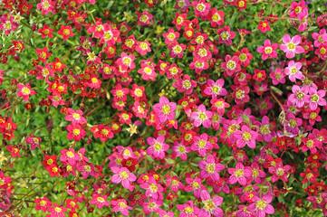 fiori 1243