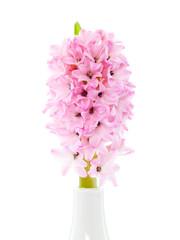 Hyazinthe in Vase