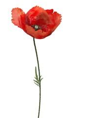 3d poppy