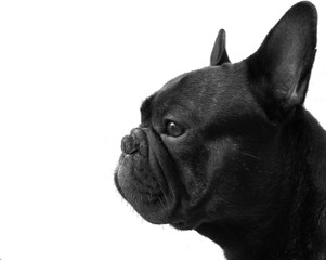 Papiers peints Bouledogue français Bouledogue français chien profil noir et blanc bw nb