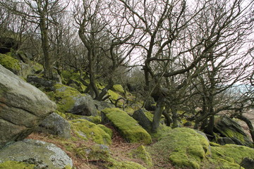 Rocky hill with moss covered rocks
