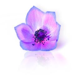 Fresh purple spring flower