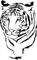 vector white tiger