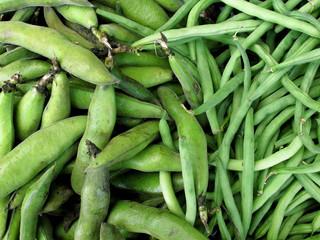 Papier Peint - fresh green bean species