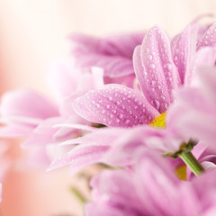 Wall Mural - Delicate pink daisies close up