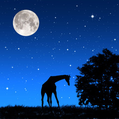 Giraffe shadow tricky  at night